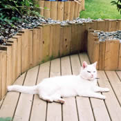Decking Image: Cat on Deck